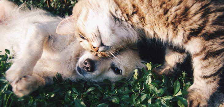 cohabitation labrador chat